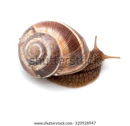 Snail on a white background. super macro - stock photo