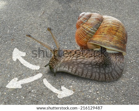 Snail on background with three arrows - stock photo