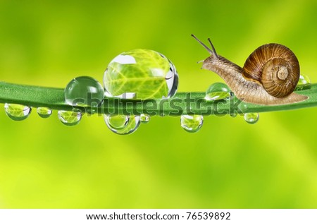 snail on dewy grass - stock photo