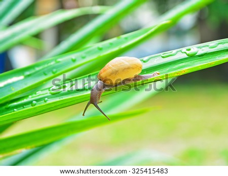 SNAIL ON GREEN PANDANUS PAMM LEAF BLURRY BACKGROUND (SELECTIVE POINT FOCUS) - stock photo