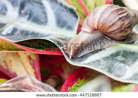Snail on leaf - stock photo