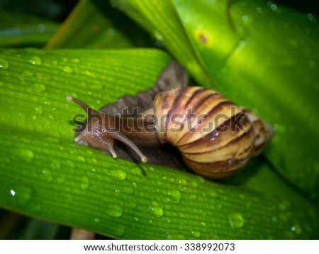 Snail on leaf green of nature - stock photo