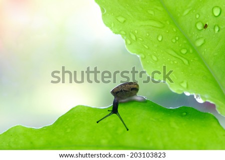 Snail on the green leaf. - stock photo