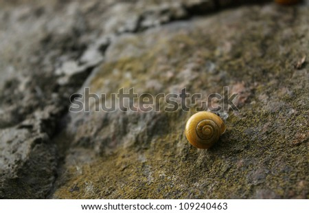 Snail on the rock - stock photo