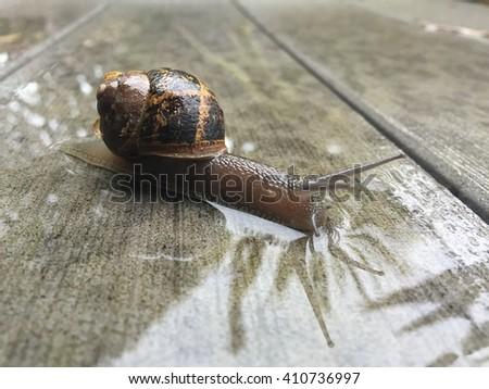 Snail on wet wood - stock photo