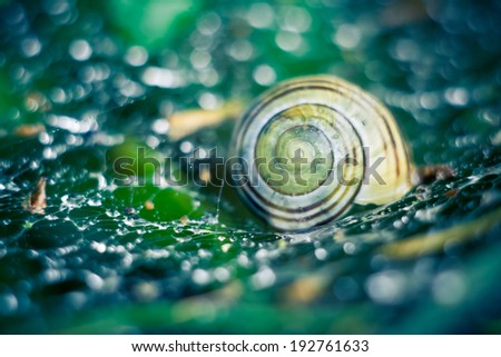 snail shell on cobweb - stock photo