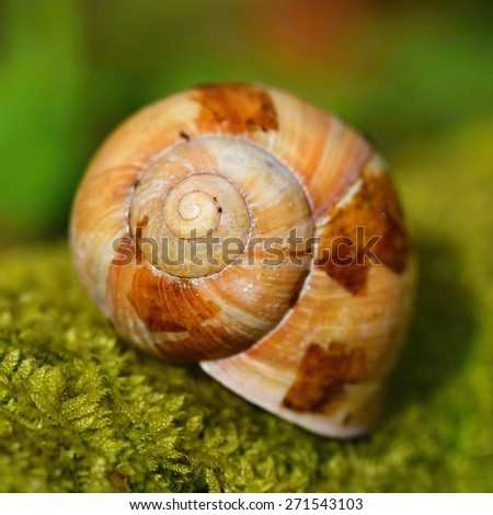 Snail shells in nature on moss - stock photo