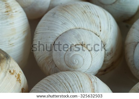 Snail shells.Twirl. - stock photo