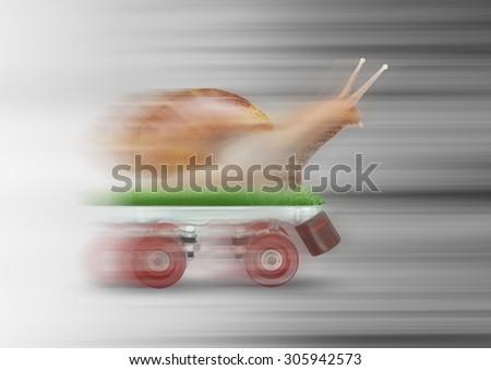 Snail skating motion blur - stock photo