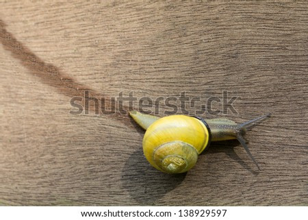 Snail track on wooden background - stock photo