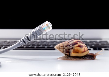 Snail with rj45 connector symbolic photo for slow internet connection. broadband connection is not available everywhere. - stock photo