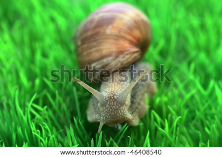 Snail with shell on green background - stock photo