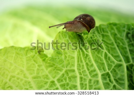 snails an cabbage - stock photo
