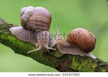 snails meeting - stock photo