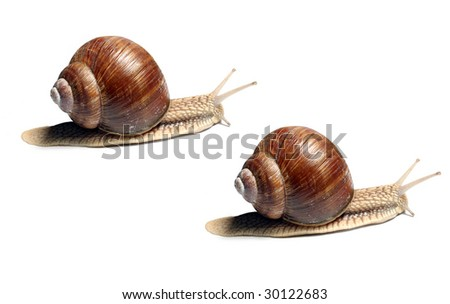 Snails racing - business metaphor - stock photo