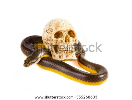 Snake and Skull on a white background - stock photo