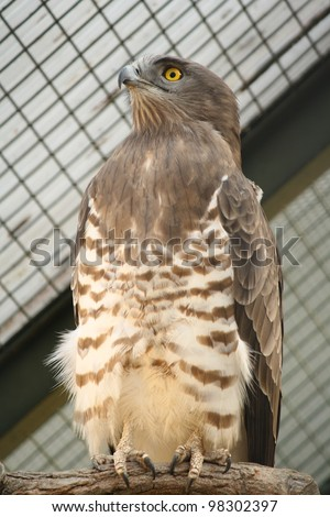 Snake Eagle - stock photo