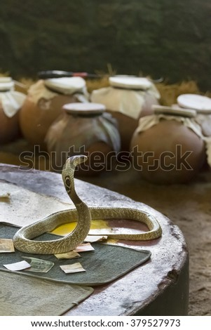 Snake in himan hands to take off venom poison - stock photo