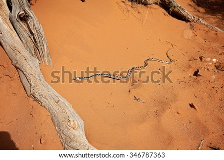 Snake in red sand of Arches National Park, Utah, USA - stock photo