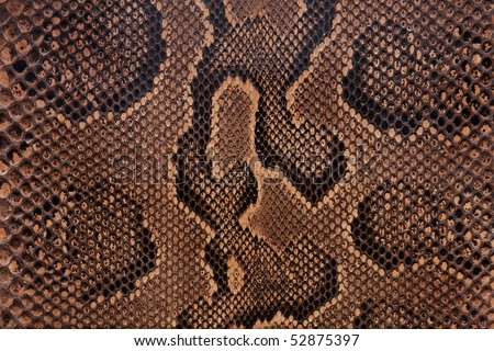 Snake leather texture - stock photo