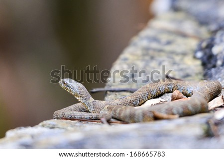 Snake on the wall - stock photo