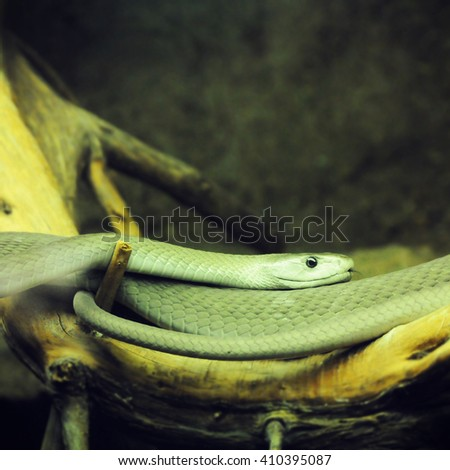 snake on tree branch - stock photo