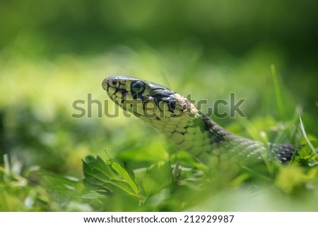 snake portrait on green grass background - stock photo