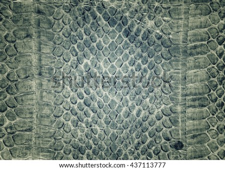 Snake skin background,Snake skin leather texture. - stock photo