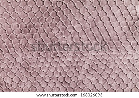Snake skin background texture - stock photo