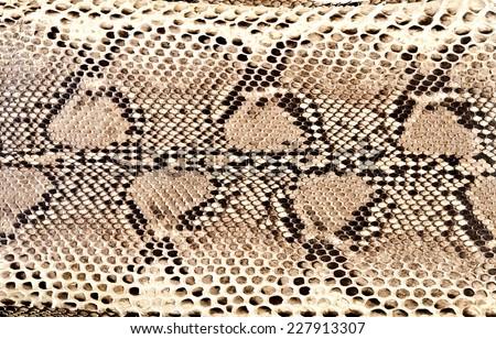 snake skin python - stock photo