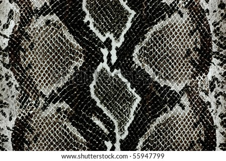 Snake skin,reptile - stock photo