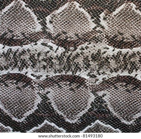 Snake skin , reptile See my portfolio for more - stock photo
