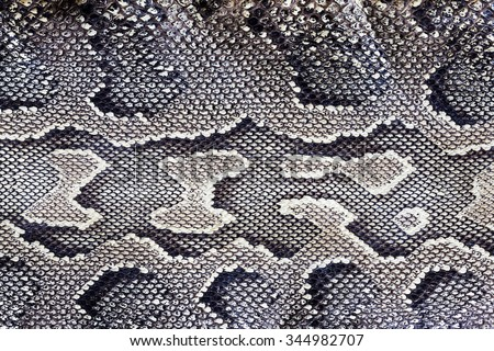 Snake texture /Skin of a black and White Snake - stock photo