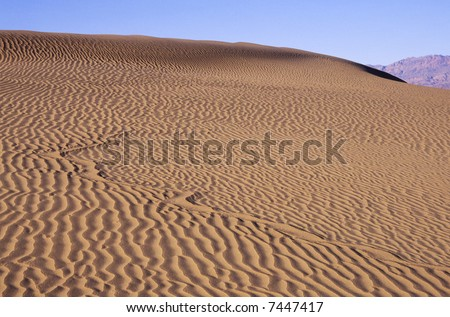 Snake track on a sand dune in Death Valley - stock photo