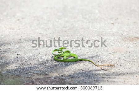snakes green - stock photo
