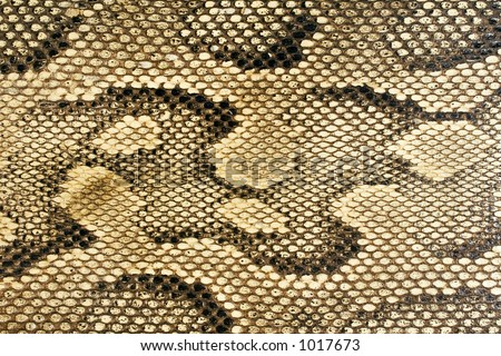 Snakeskin-Texture - stock photo
