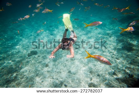 Snorkeler diving along the brain coral. Warning - authentic shooting underwater in challenging conditions. A little bit grain and maybe blurred. - stock photo