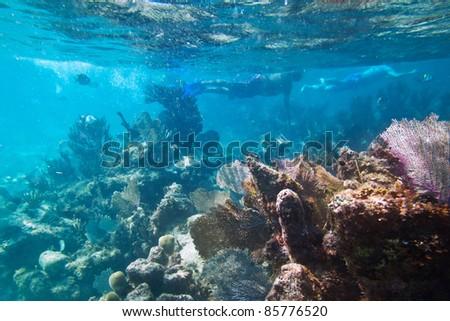 Snorkeling in Caribbean Sea, Mexico - stock photo