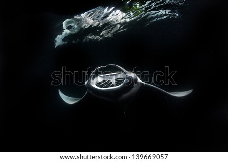 Snorkeling with Manta ray at night while feeding in maldives - stock photo