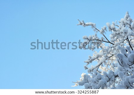 Snow and Ice on Tree Branches - stock photo
