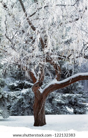 Snow and ice surrounding bare tree  in winter - stock photo
