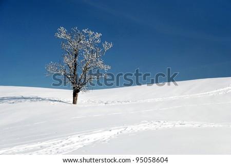 snow and lone tree in winter season - stock photo