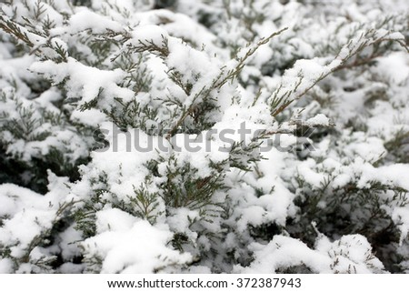 Snow covered branch - stock photo