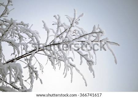 Snow-covered branch against sunset sky - stock photo