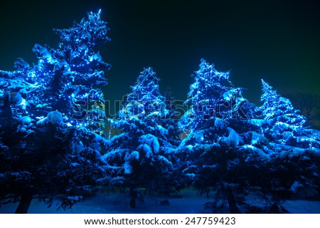Snow covered Christmas tree lights in a winter forest by night. Huge fir trees with Christmas lights, stand out brightly against the dark blue tones of the snow covered scene. Super wide angle shot. - stock photo
