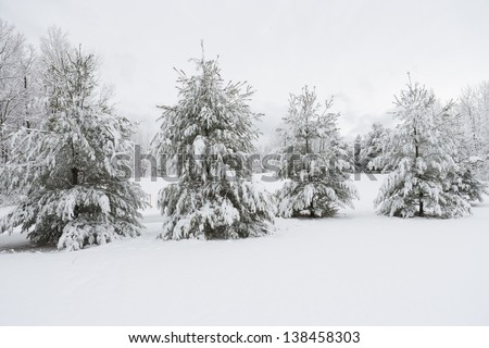 Snow covered evergreen trees, Stowe, Vermont, USA - stock photo