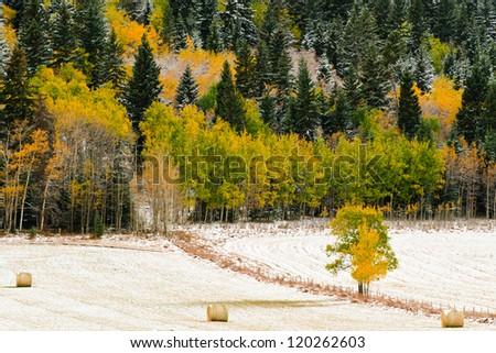 Snow covered farmland in Autumn, Alberta Canada - stock photo