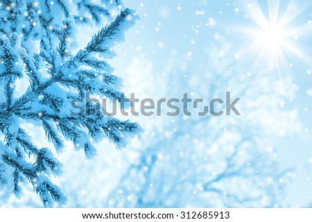 Snow-covered fir-tree branch against the sky - stock photo