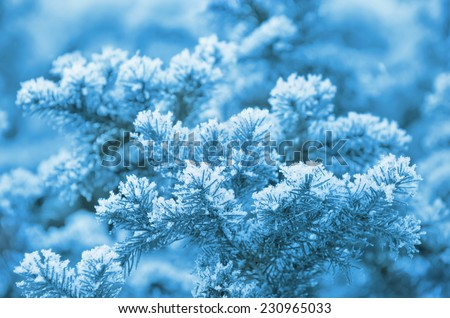 Snow-covered fir-tree branches - stock photo