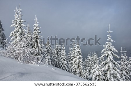 Snow Covered Mountain Evergreens on Cloudy Day - stock photo